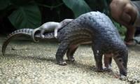世界自然基金会亚太地区代表处呼吁终止贩运和销售野生动物