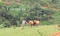 老街省文盘县屯上村瑶族同胞通过开展农业项目脱了贫