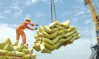 越南政府总理同意恢复大米出口但必须确保粮食安全