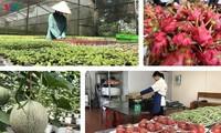 在新冠肺炎疫情背景下促进越中农产品贸易