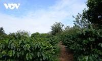 """山萝省面向国家五星级标准打造""""一乡一品""""咖啡产品"""