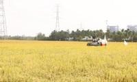 朔庄省应对咸潮入侵,保护冬季稻