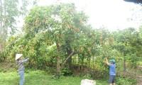 越南农民将越南农产品推向世界