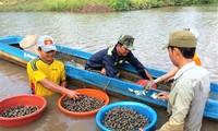 金瓯省东时乡居民因养殖血蚶建起了瓦房