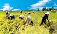 Landwirtschaft: eine Säule der vietnamesischen Wirtschaft