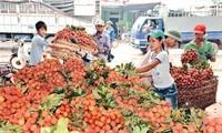 Ausbau des Markenzeichens vietnamesischer Landwirtschaftsprodukte