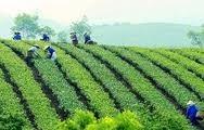 Förderung der Berufsausbildung für Arbeitskräfte auf dem Land