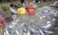 Neues US-Landwirtschaftsgesetz erschwert vietnamesischen Pangasiusexport