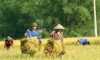Verkauf von Anteil - Neues Modell zur Förderung der Position der Bauern im Mekong Delta