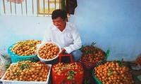 Longan-Anbau nach Modell VietGap