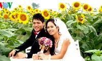 Sonnenblumen in der zentralvietnamesischen Provinz Nghe An