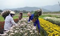 Moderne Genossenschaften schaffen neue Impulse für Landwirtschaftsentwicklung