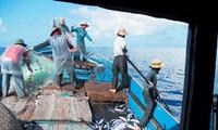 Vietnam protestiert gegen chinesisches Fischfangverbot