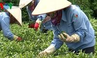 Vietnam erreicht in den ersten fünf Monaten einen Handelsüberschuss von 1,36 Milliarden US-Dollar