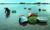 Das Alltagsleben in Dong Thap Muoi während der Hochwassersaison