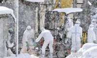 China verstärkt Maßnahmen gegen H7N9-Epidemie bei Menschen