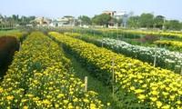 Blumendorf Phu Van entwickelt Blumenanbau parallel zum Tourismus