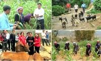 Der Zugang landwirtschaftlicher Produkte aus Vietnam zu ausländischen Märkten
