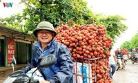 Früchte aus Vietnam werden in viele Länder exportiert