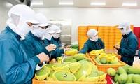 Export von Produkten der Landwirtschaft im April nimmt stark zu