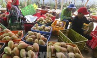 Unternehmen von Obst und Gemüse profitieren von Vorteilen aus dem Freihandelsabkommen