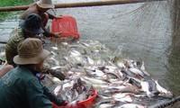 Empresas vietnamitas recurrirán aumento de tarifas antidumping de EEUU