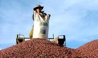 Intercambios comerciales Vietnam-Chile baten nuevo récord