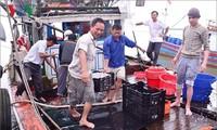 Pescadores de Quang Tri reanudan actividades laborales en el mar