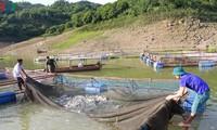 Vietnam y Noruega estrechan cooperación en el cultivo y procesamiento de productos acuícolas
