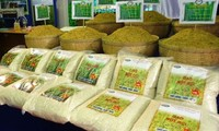 Exportaciones de arroz de Vietnam alcanzan casi 6 millones de toneladas en los primeros 11 meses de 2019