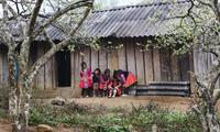 Moc Chau en temporada de flor de ciruelo