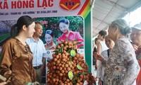 Inauguran feria de promoción de lichis de Thanh Ha y productos agrícolas limpios
