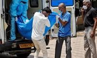 El mundo registra más de 29,4 millones de casos del covid-19