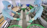 Estados Unidos levanta el impuesto antidumping al camarón de una empresa vietnamita
