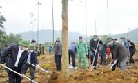Localidades vietnamitas lanzan el Festival de la Siembra de Árboles