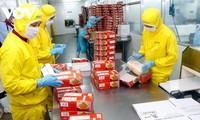 Aumentan 30% exportaciones de productos agrosilviculturales y pesqueros vietnamitas
