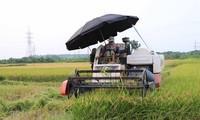 Medio extranjero destaca el nivel de mecanización en la agricultura de Vietnam