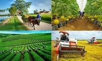 Vietnam continúa elevando la eficiencia de la económica colectiva