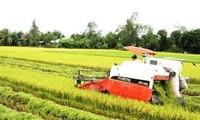 Modelo del Gran Campo en Vietnam muestra resultados alentadores
