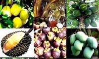 Vietnam incentiva exportaciones agrícola y acuática