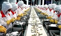 Camarones vietnamitas exportados a EEUU no violan criterios de dumping
