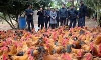 Bac Giang acomete construcción rural