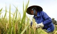 Vietnam, premiada por la lucha contra la pobreza y la desnutrición