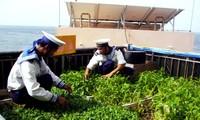 Mini-modelos agrícolas en islas de Truong Sa