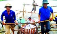 Irracional impuesto antidumping de Estados Unidos contra pescados de Vietnam