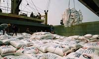 Vietnamese rice export increases
