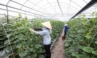 새로운 농촌 지역 건설을 위한 과학 기술 연구 촉진