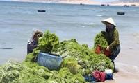 베트남과 한국: 녹색 경제 향함