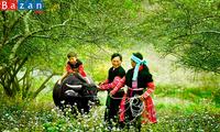 """선라 (Sơn La)성 자오 띠엔 (Dao tiền) 소수민족의 아기들을 위한 """"부어 판 뜨쥬 (búa phàn tziu)""""라는 전통 의례"""
