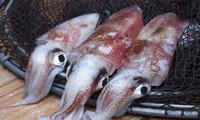 한국 - 베트남의 최고 오징어, 낙지  수입시장